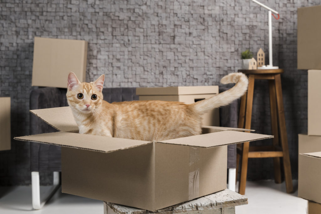Moving company - Cat in boxes